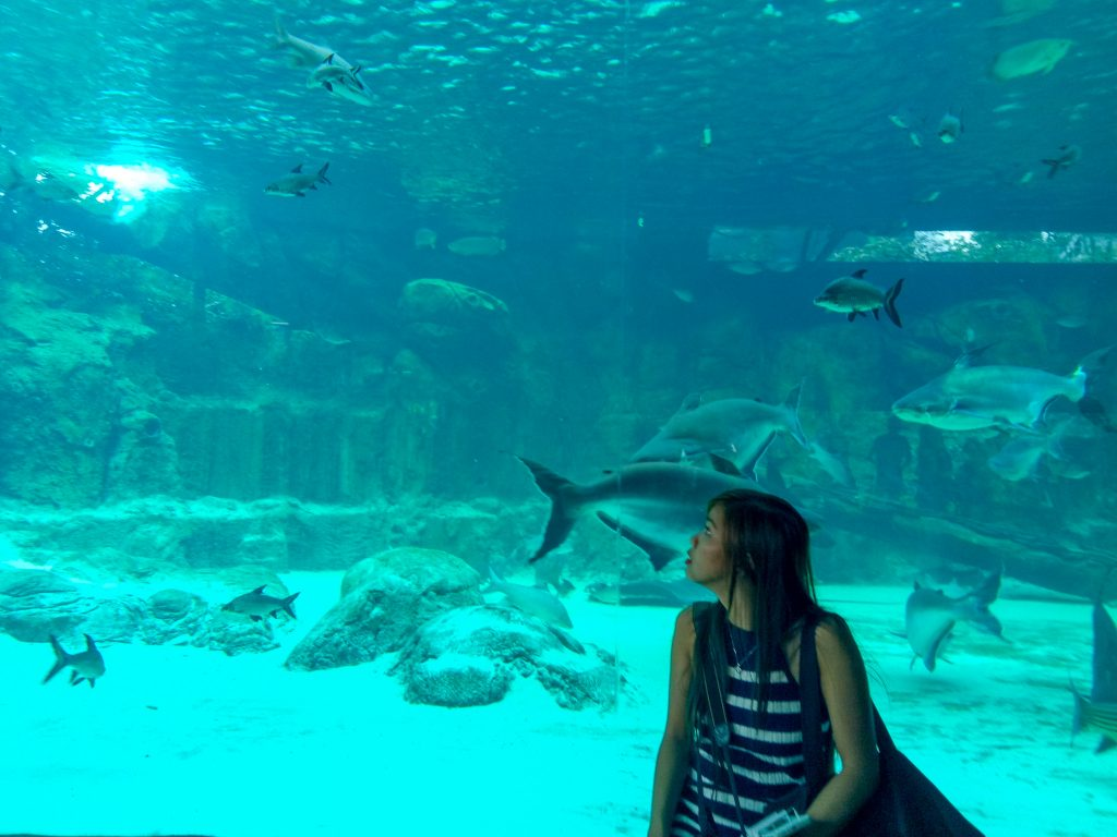 "ALT=""singapore travel guide and with the blue aquarium at river safari"""