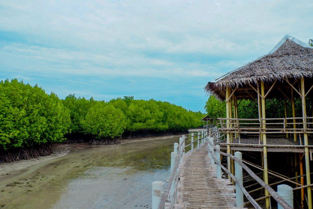 "ALT=""bantayan island cebu mangrove"""