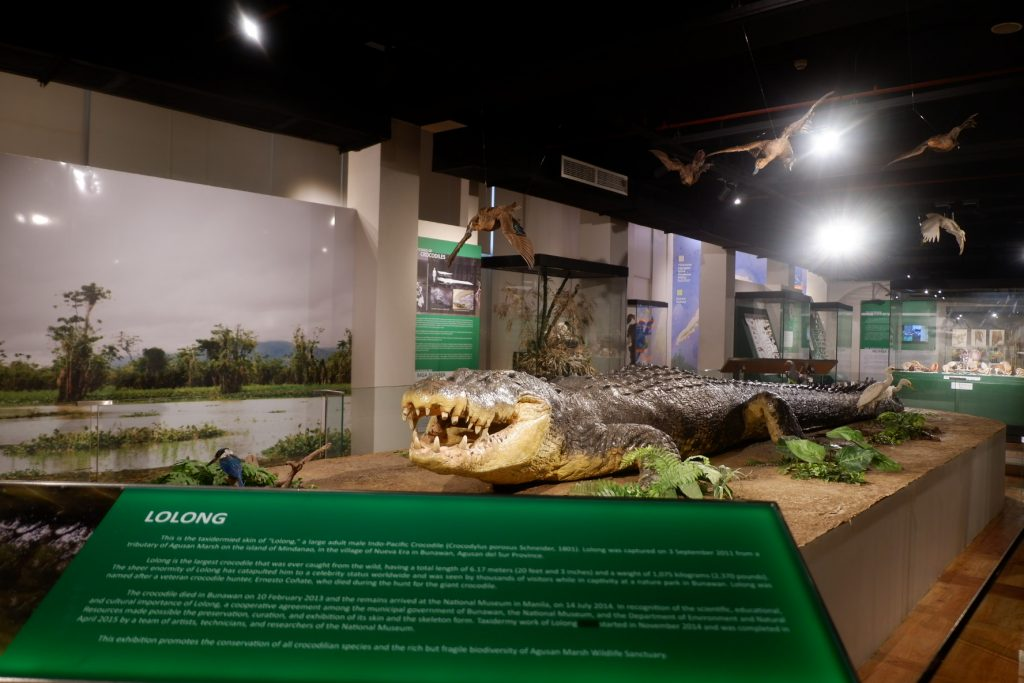"""ALT=""""national museum of natural history and lolong crocodile"""""""