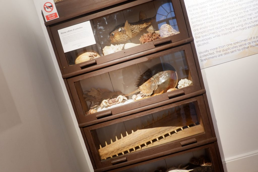 """ALT=""""the geology of the philippines at natural history"""""""