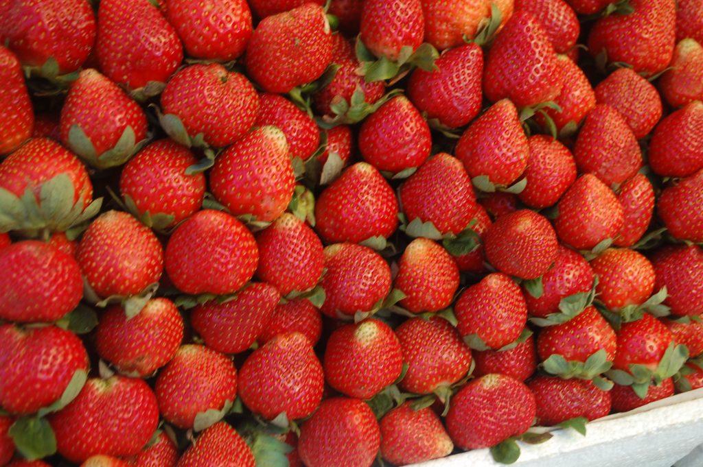 """ALT=""""strawberries to eat in baguio city benguet"""""""